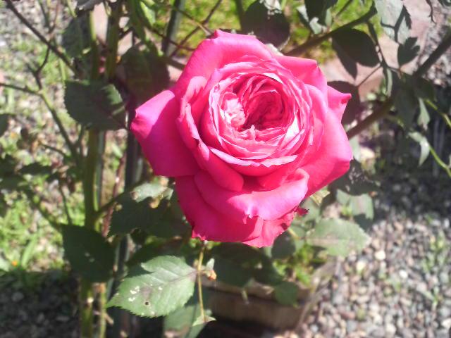 きれいな花にはトゲがある。